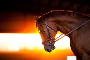 Royal Ascot travel - horse image